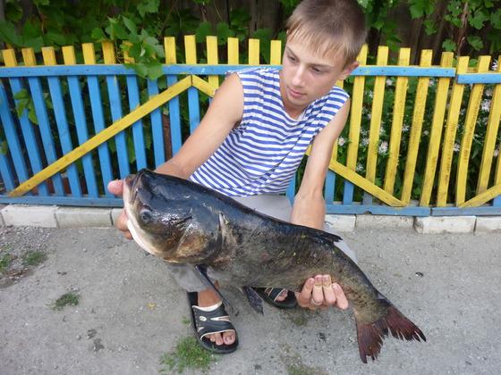 нерест толстолобика в ставропольском крае